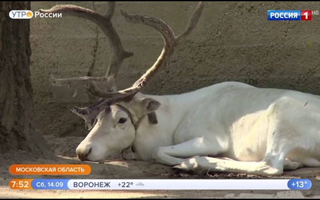 Видео с передачи «Утро России»